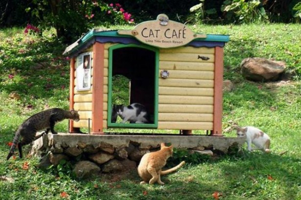 Prepare-for-Winter-and-Prep-Community-Cat-Shelters
