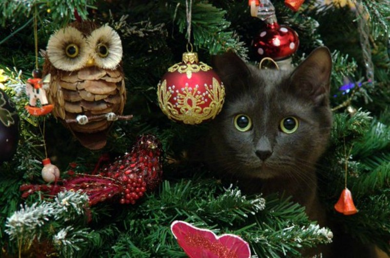 Happy Holidays from the Community Cats Podcast