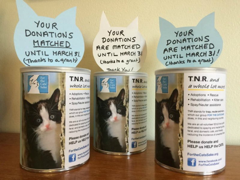 Community Cats Grants Equals More Money to Spay it Forward