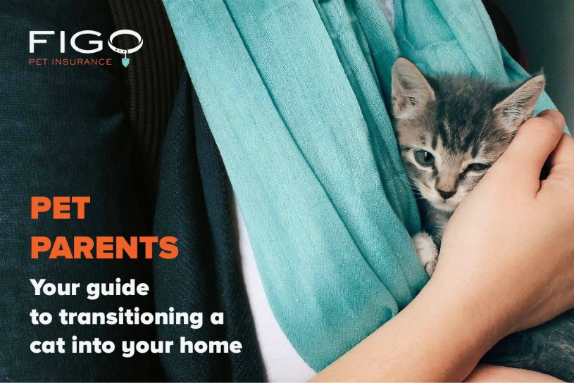 How to Introduce Cats to New Environments