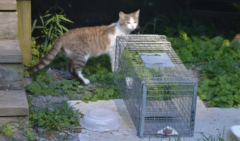 Time to Think About Winterizing Feral Cat Shelters