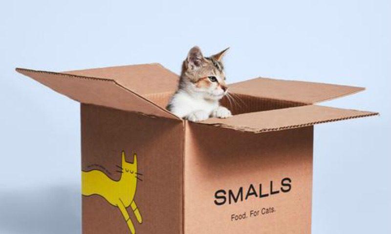 Feline Nutrition 101