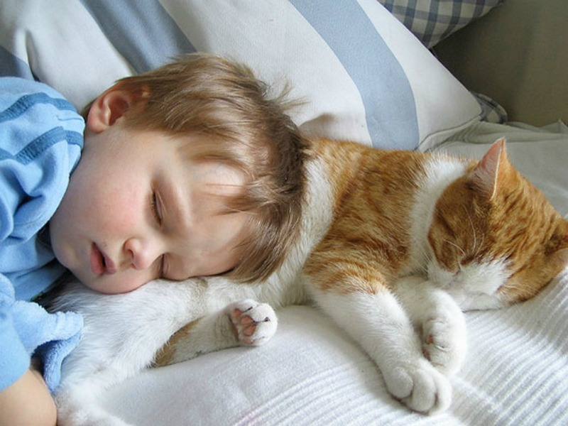 Kids, Cats and Books