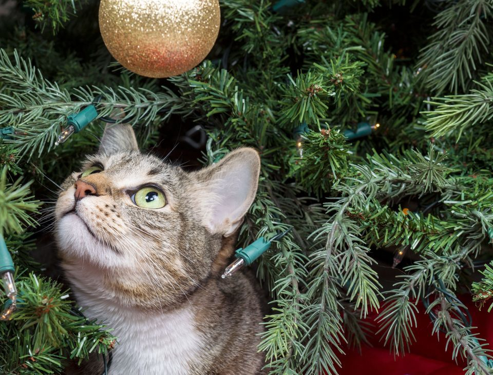 A Community Cat's Christmas
